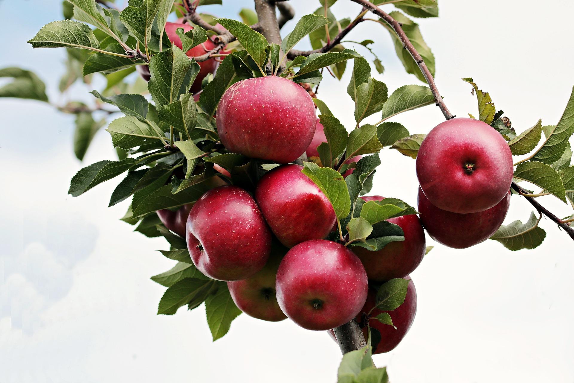 Als je honger hebt en je wilt geen appel eten, dan had je geen honger